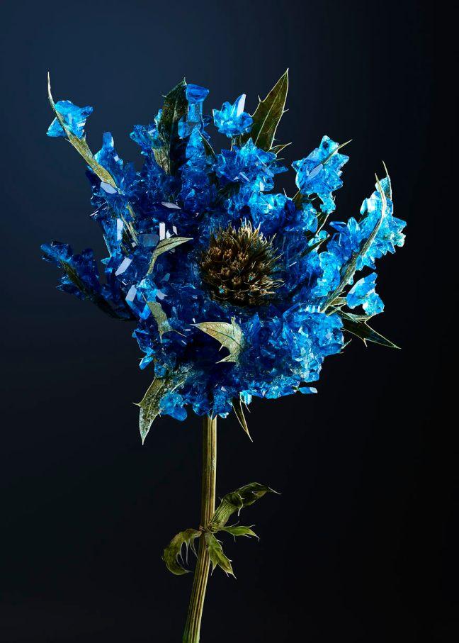 sketch_exhibition_host_lapis_lazuli-57c6cff32037f__880